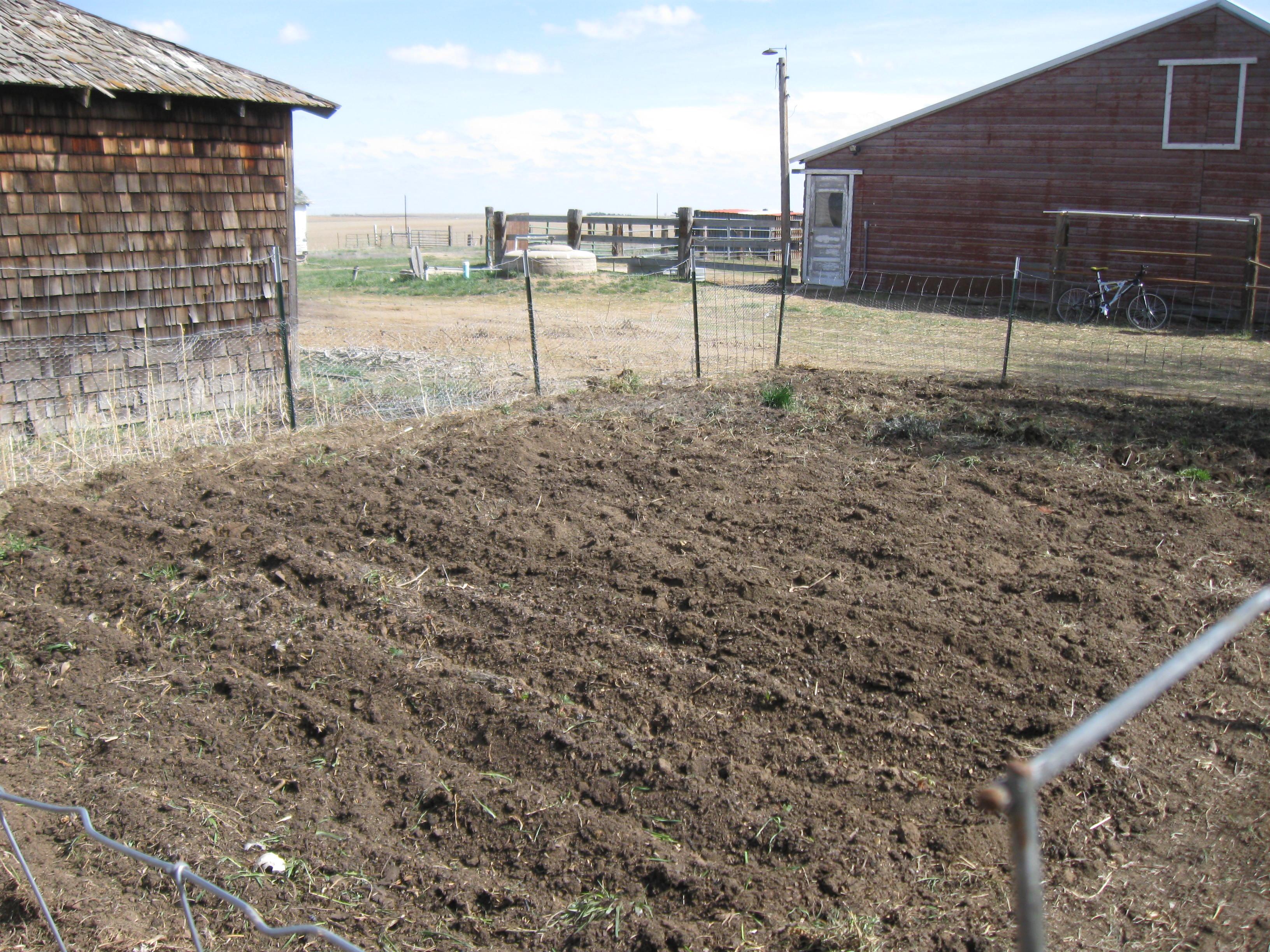 No Till Garden The City Girl Farmer